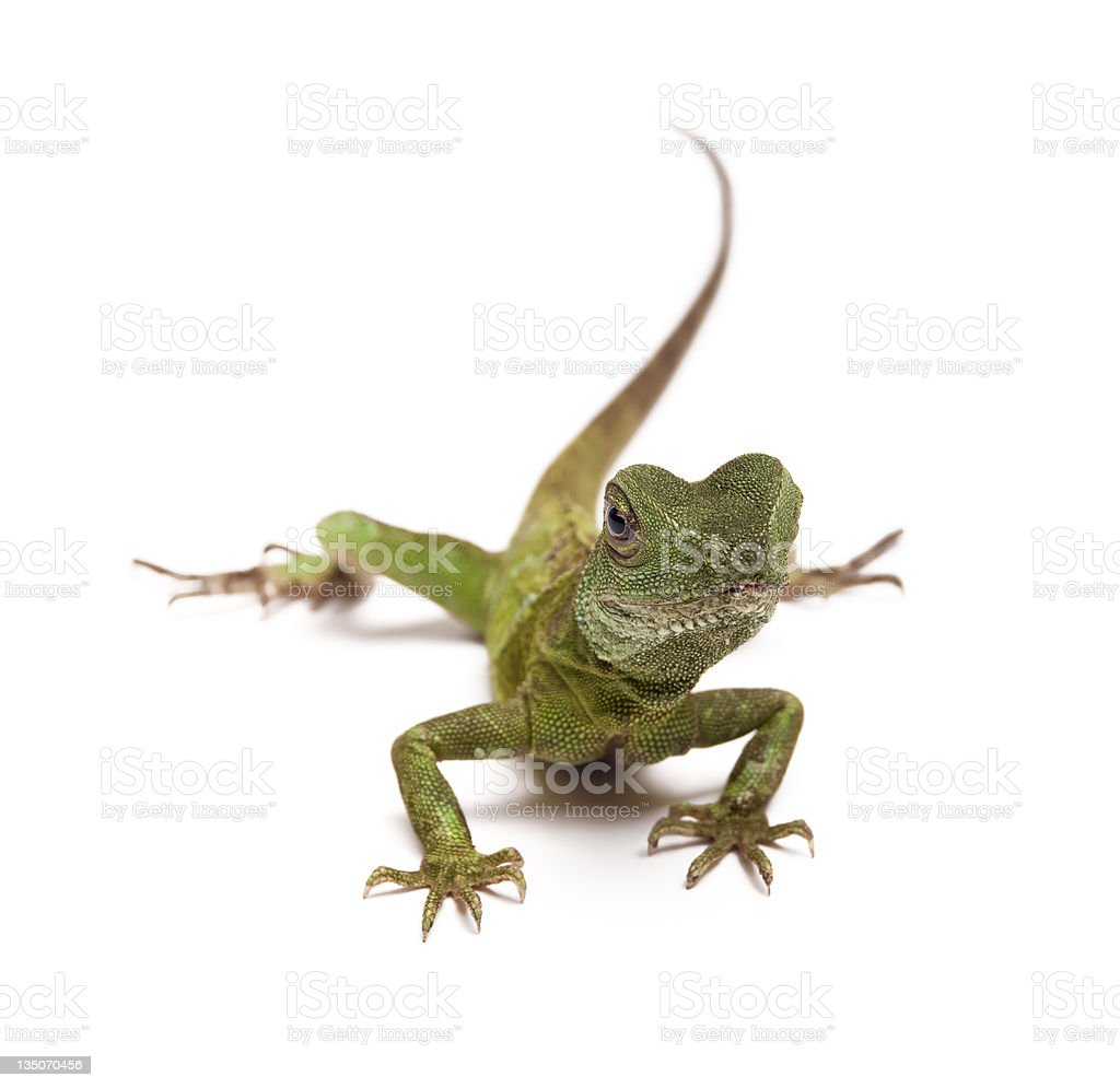 Chinese water dragon royalty-free stock photo