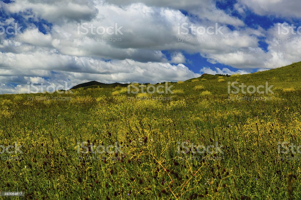 chinese Wulanbutong grassland stock photo