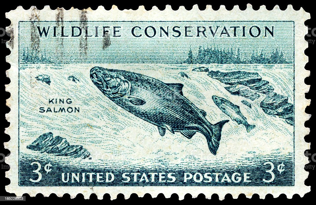 Chinook King Salmon Wildlife Conservation Postage Stamp royalty-free stock photo