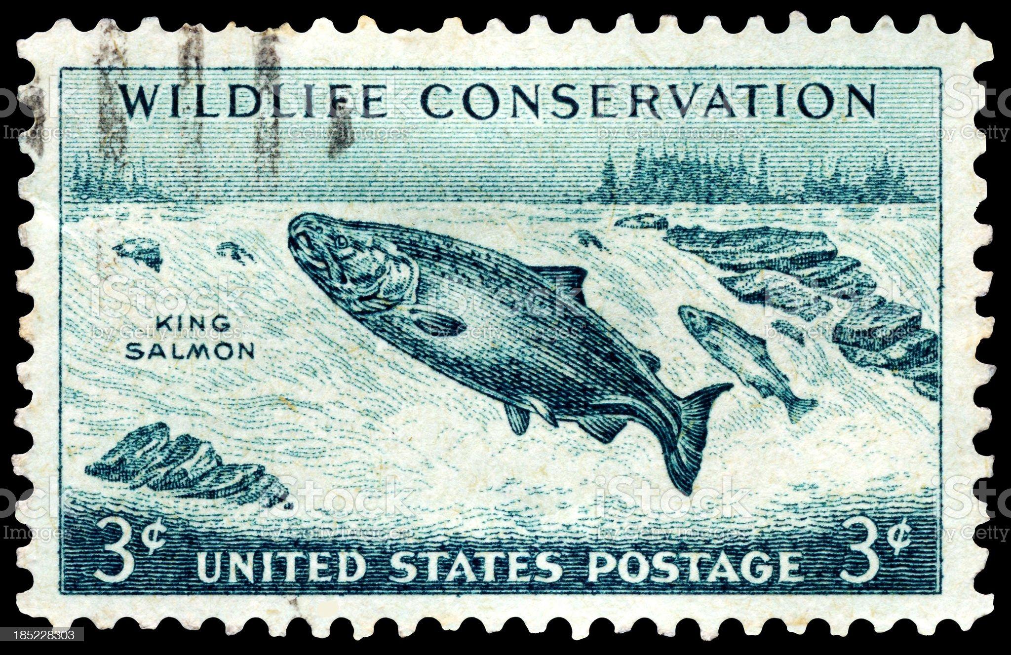 Chinook King Salmon Wildlife Conservation Postage Stamp royalty-free stock photo