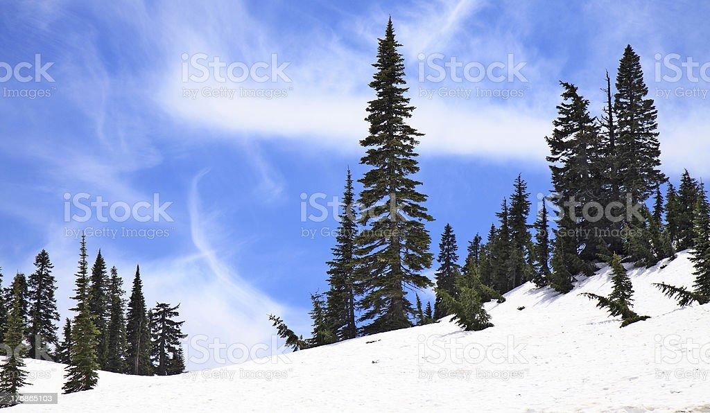 Chinook Pass in Late June stock photo