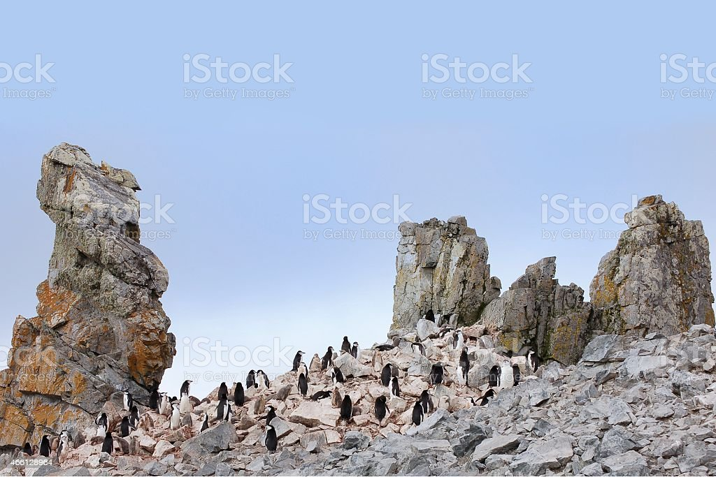 Chinstrap Penguin Colony On Half Moon Island stock photo