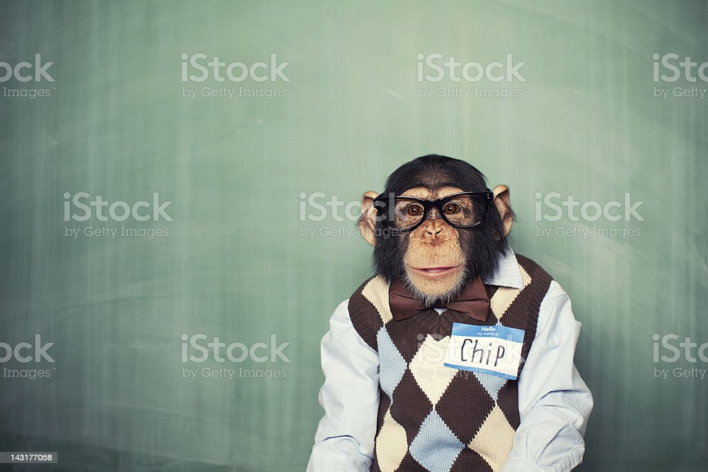 Chip the Chimp stock photo