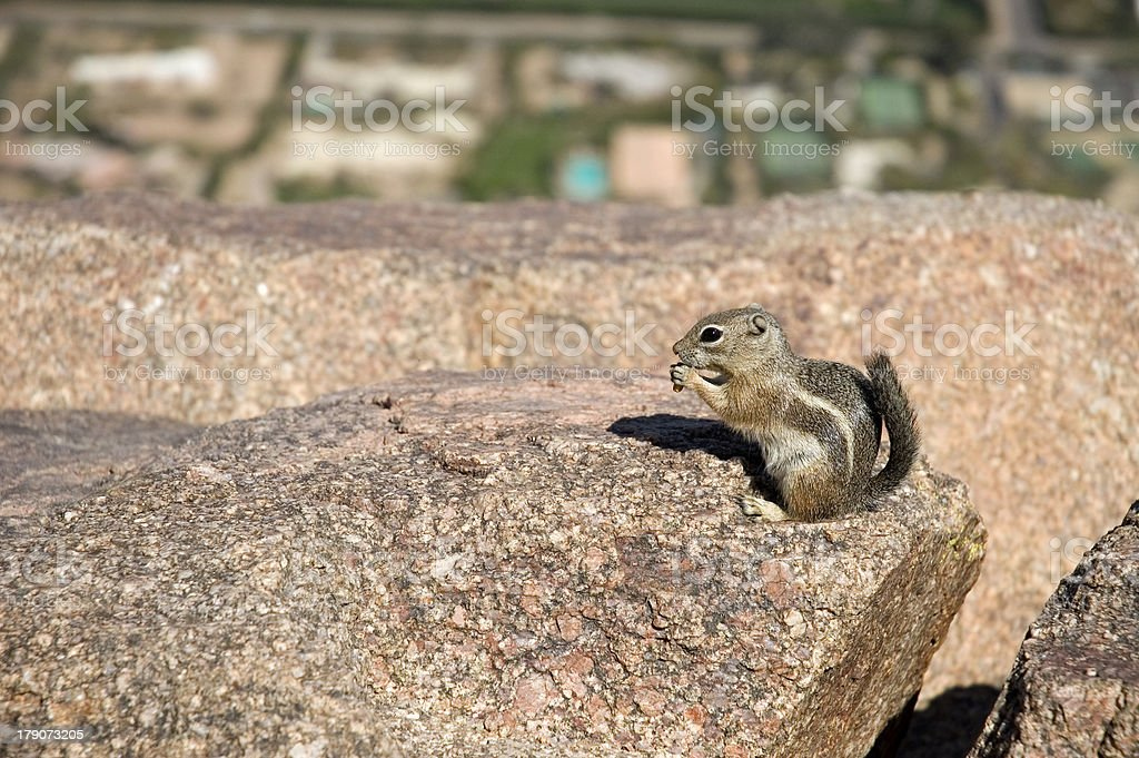 Chipmunk Feeds on Rocky Ledge stock photo