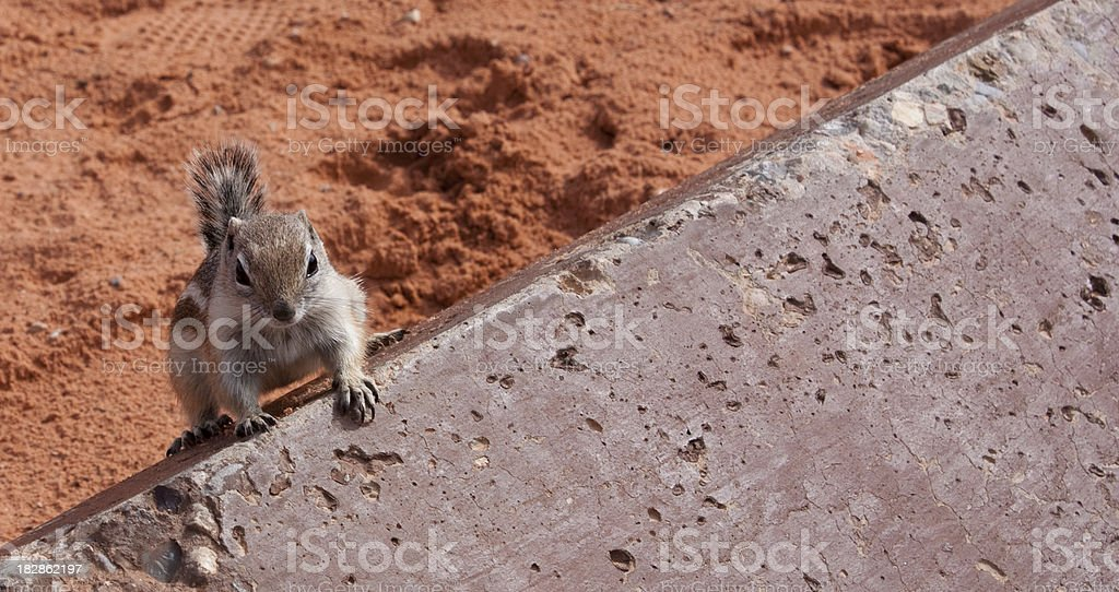 Chipmunk on a Rock royalty-free stock photo