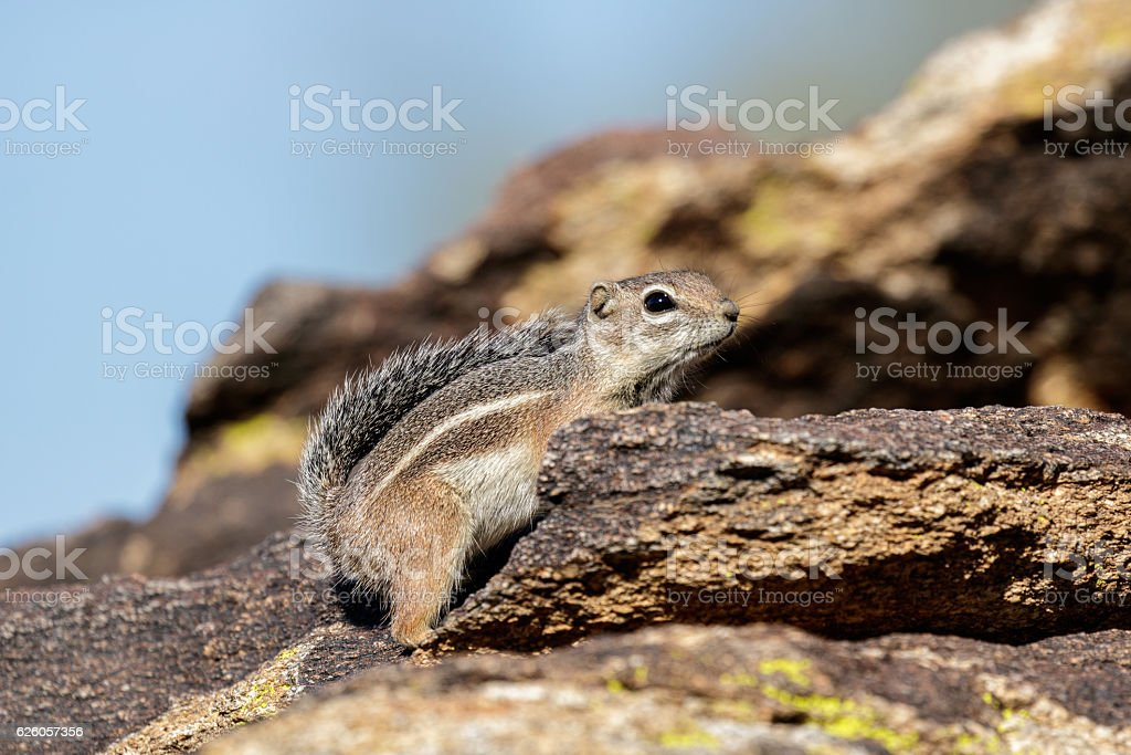 Chipmunk stands on a stone in the sunshine stock photo