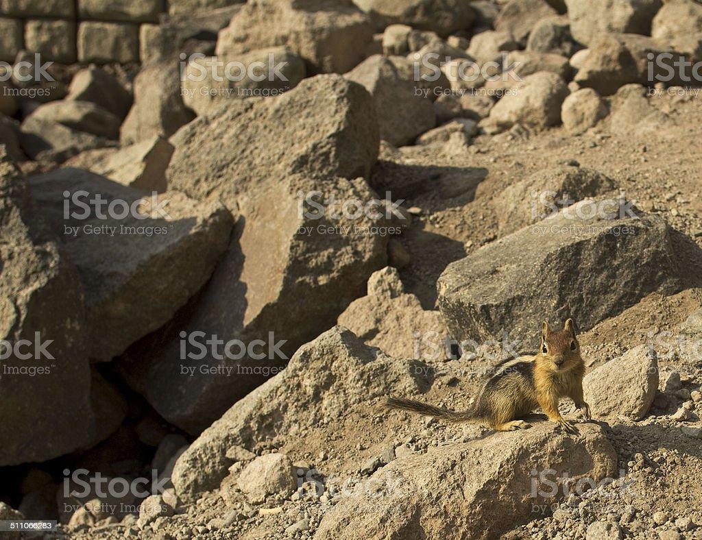 Chipmunk upon rocks stock photo