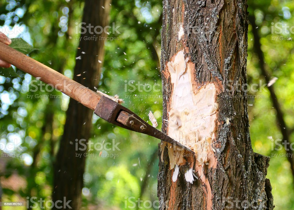 Chips fly apart after the lumberjack chopping wood stock photo