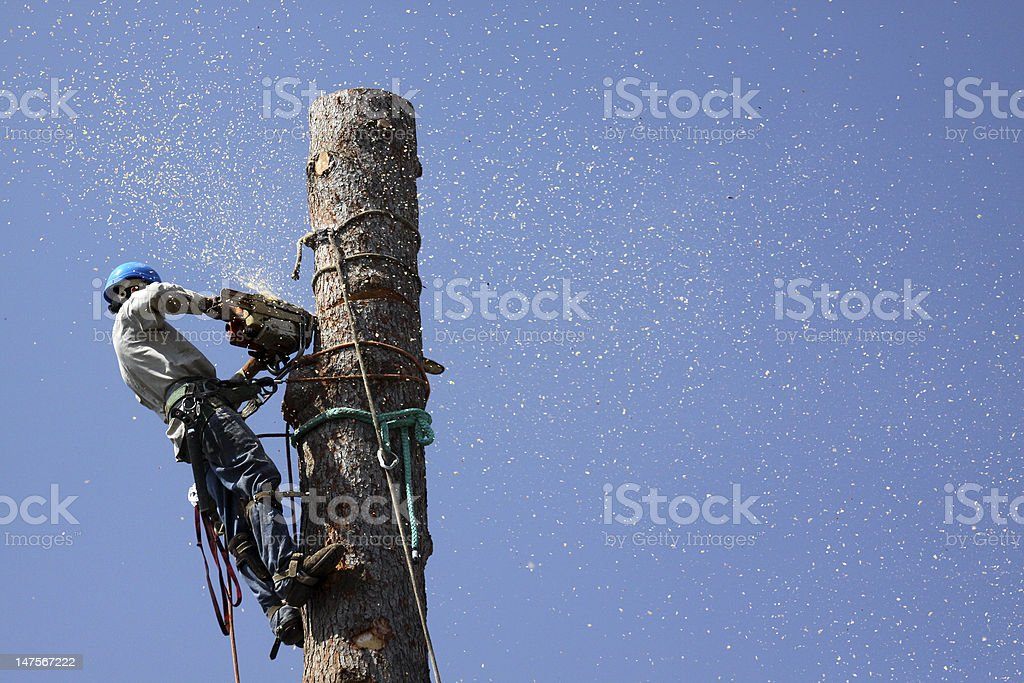 Chips flying everywhere tree removal stock photo