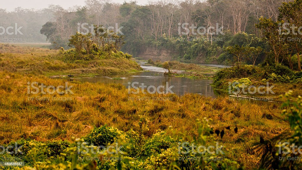Chitwan A tropical rainforest stock photo