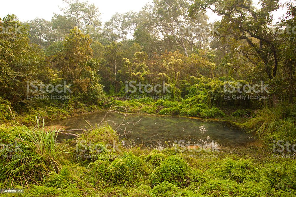 Chitwan A tropical rainforest royalty-free stock photo