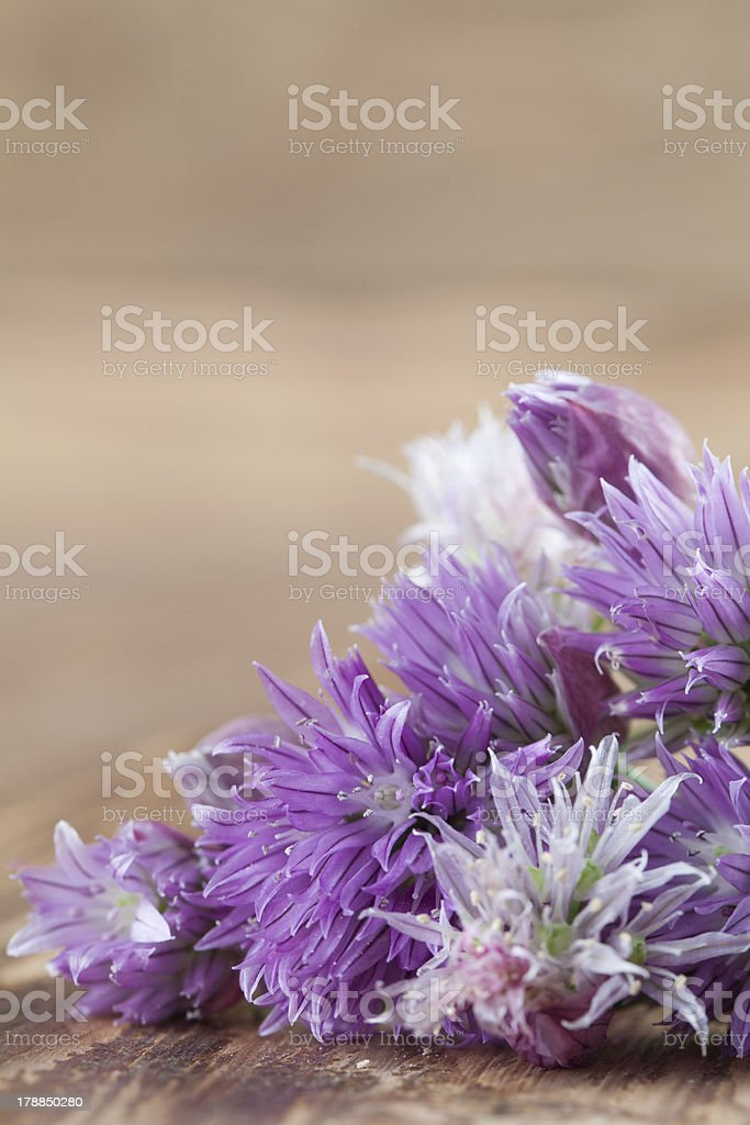 Chive blossoms royalty-free stock photo