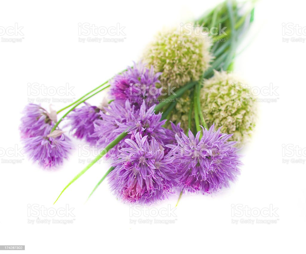 Chive flowers royalty-free stock photo