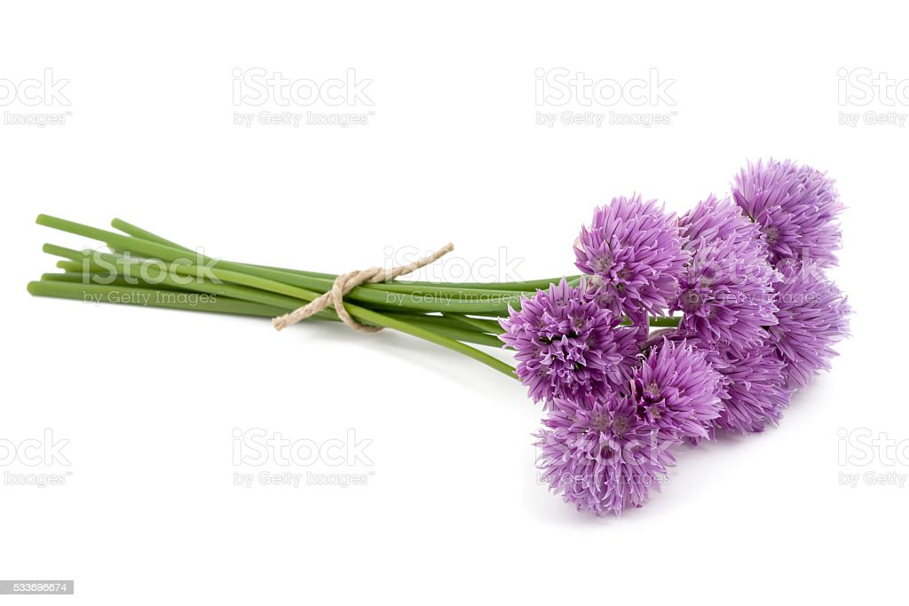 Chive  flowers stock photo