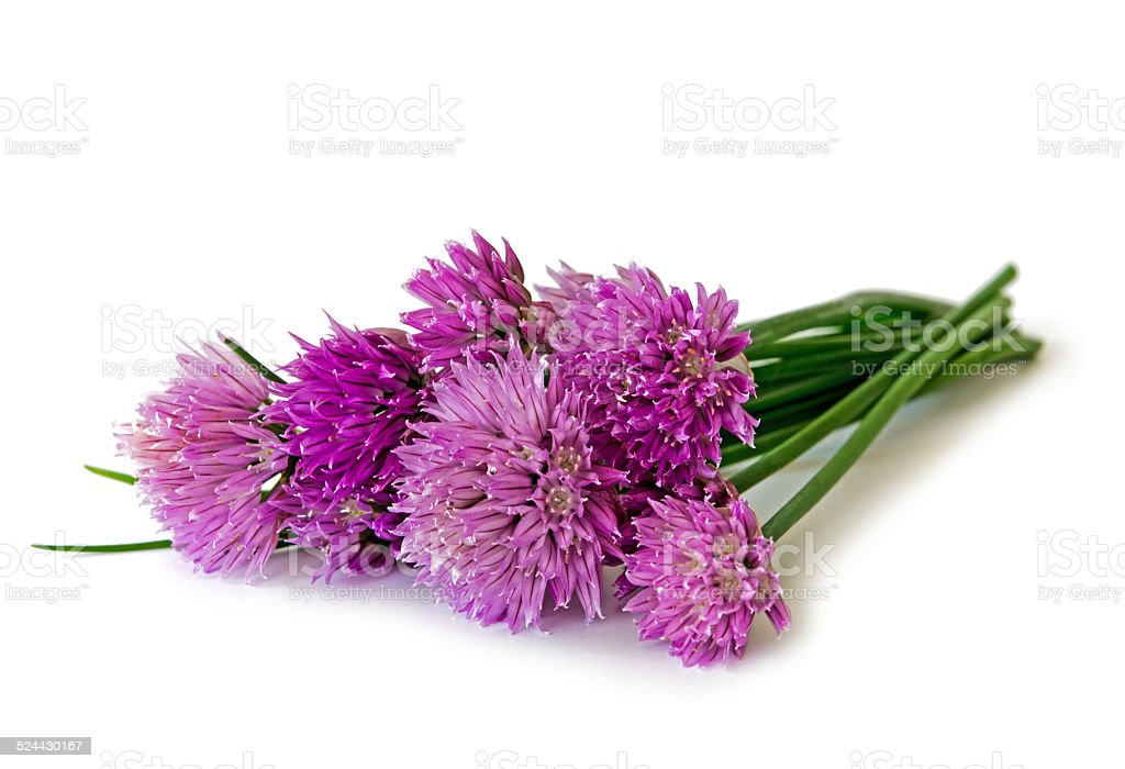 Chive stock photo
