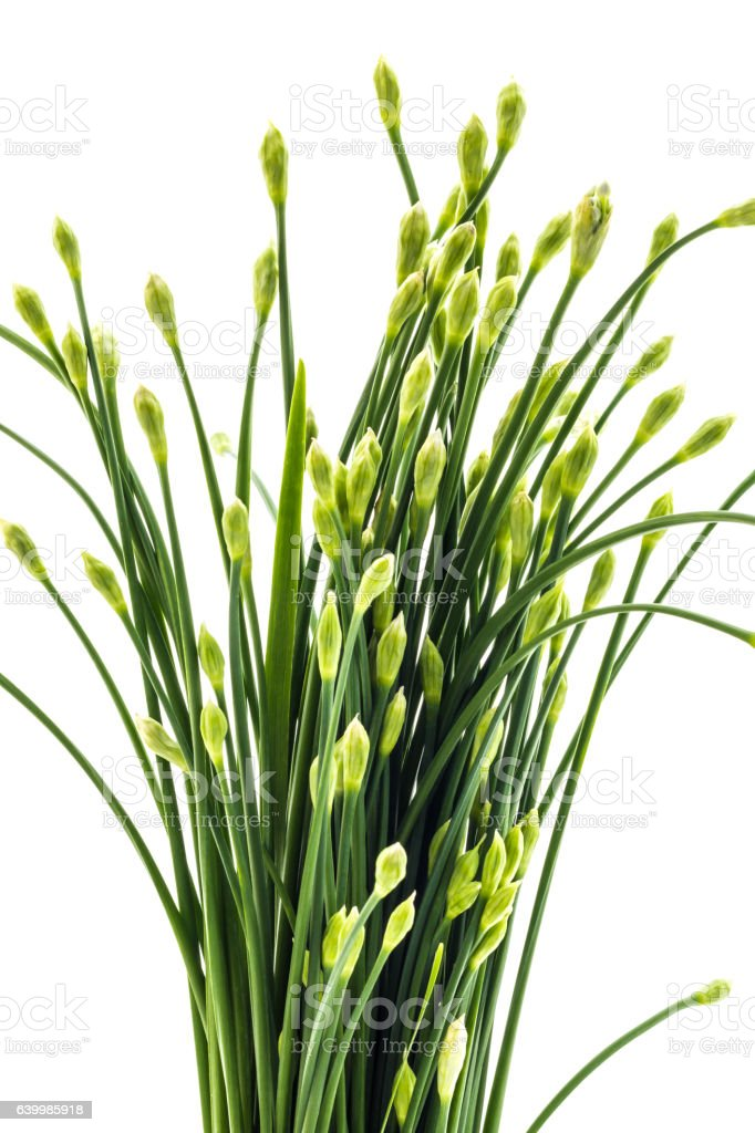 Chives flower or Chinese chive isolated on white background. Edi stock photo