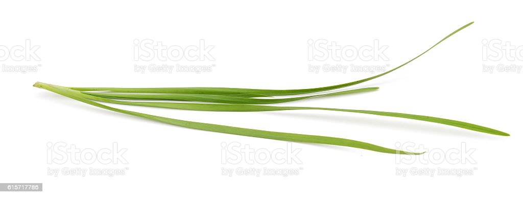 chives leaves (leek) isolated on pure white stock photo