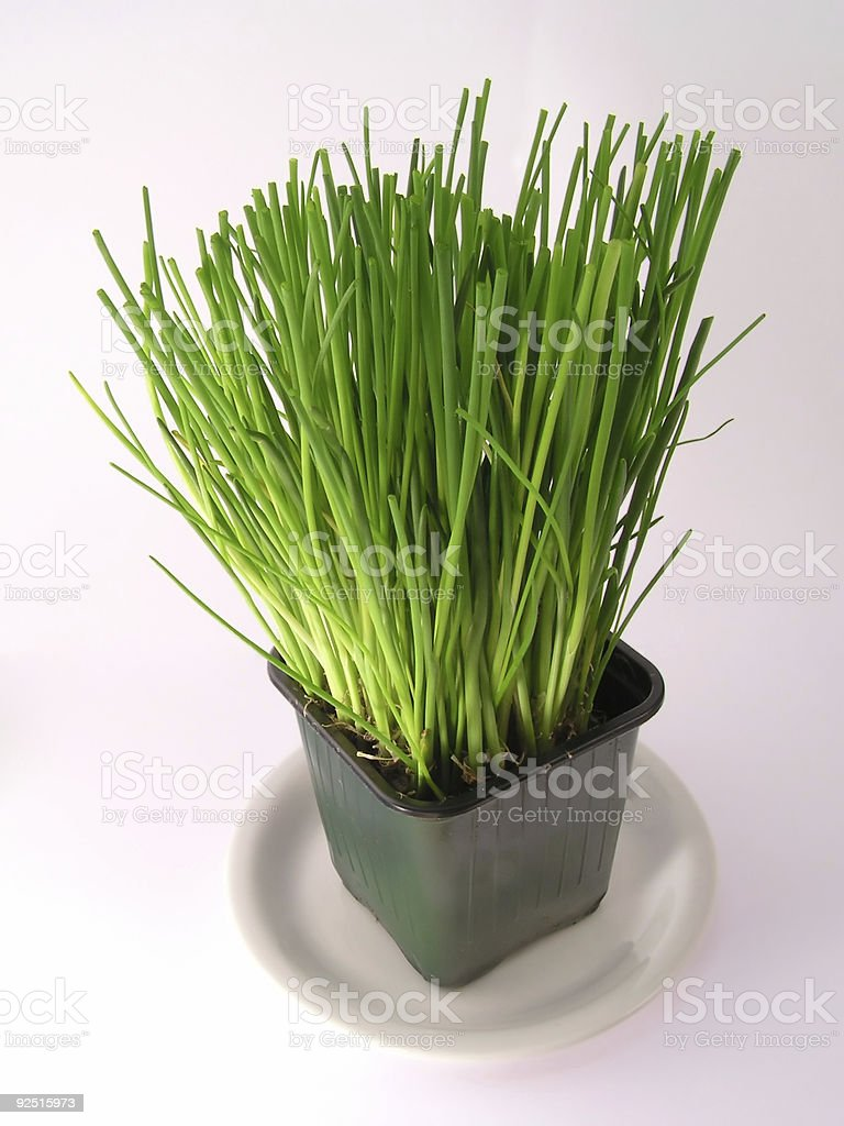 chives, spring onion royalty-free stock photo