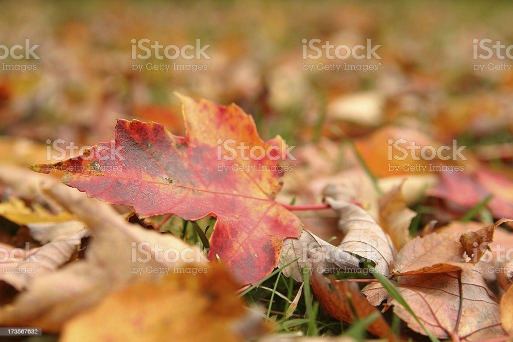 Chlorophyl blast stock photo