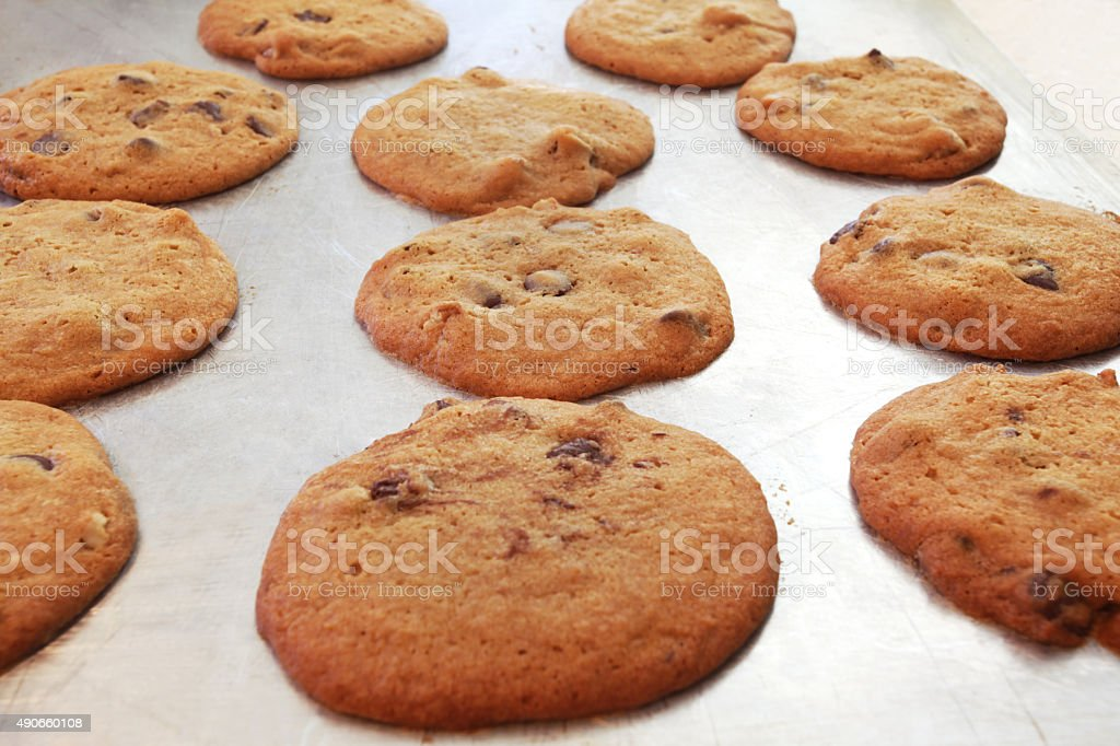 Chocolate chip cookies hot out of oven on cookie sheet. stock photo