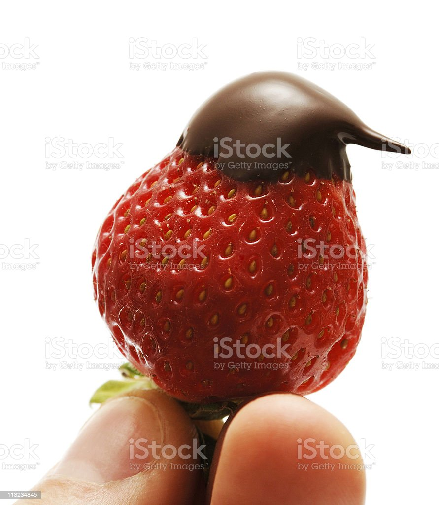 chocolate covered strawberry held against white stock photo