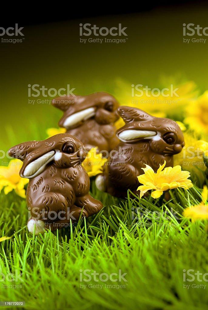 Chocolate Easter Bunny stock photo