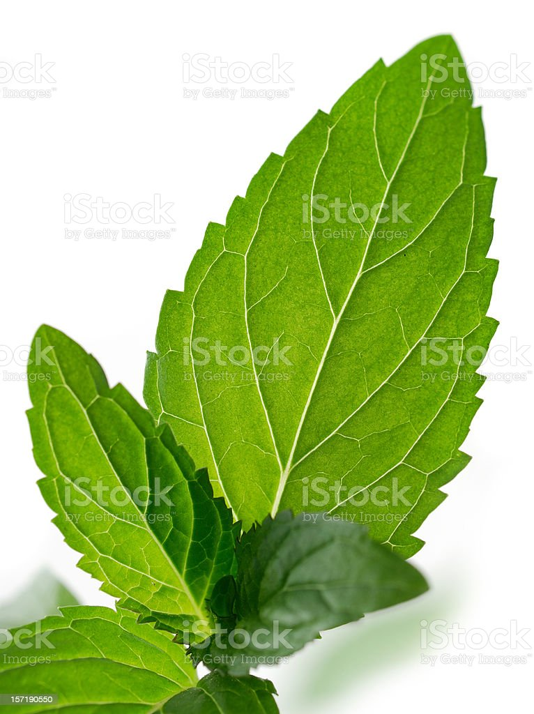 chocolate mint royalty-free stock photo