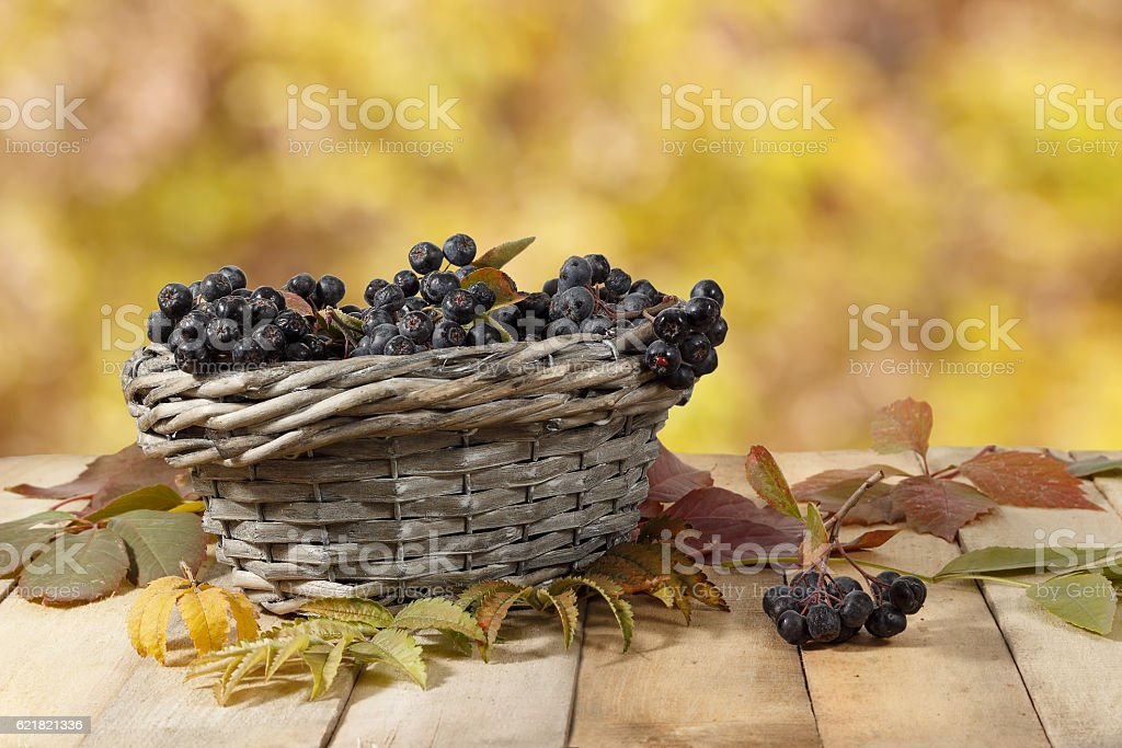 Chokeberry  in basket on wooden table on background of leaves stock photo