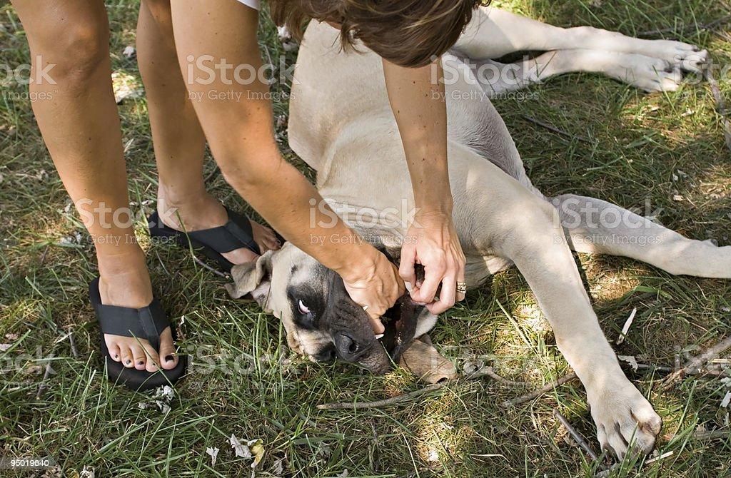 Choking Dog stock photo
