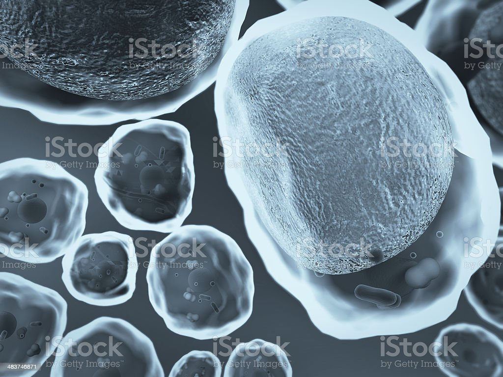 cholesterol, cell stock photo