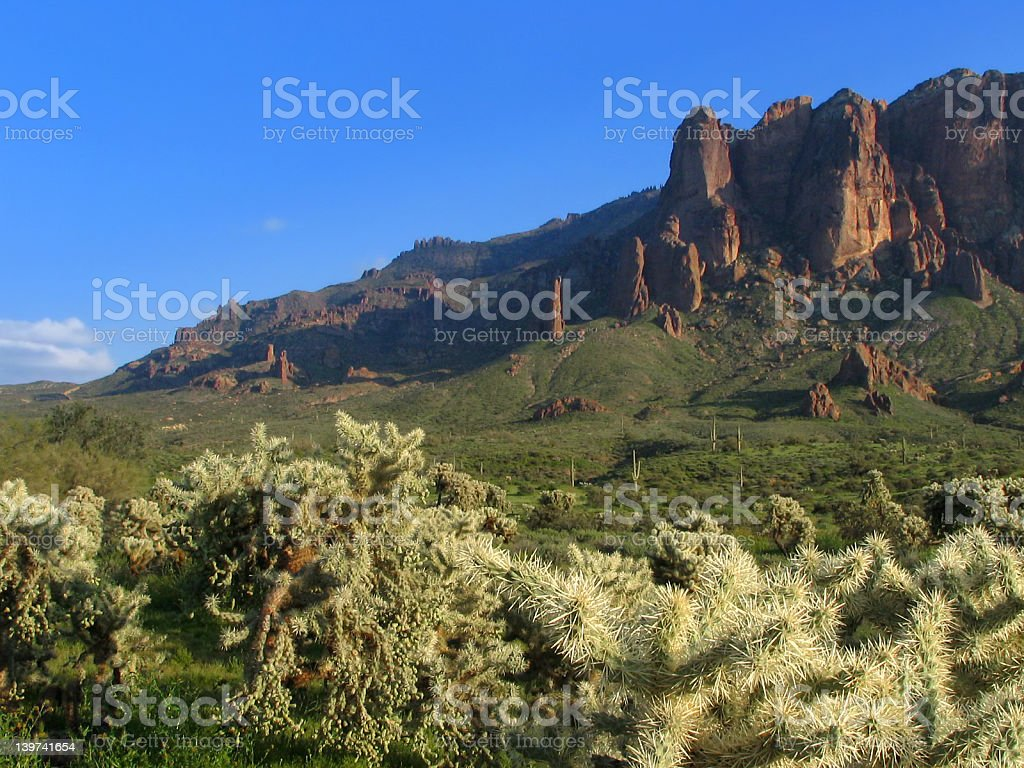 Cholla in the Superstitions stock photo
