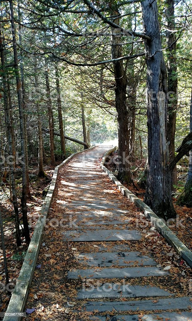 Choose your path stock photo