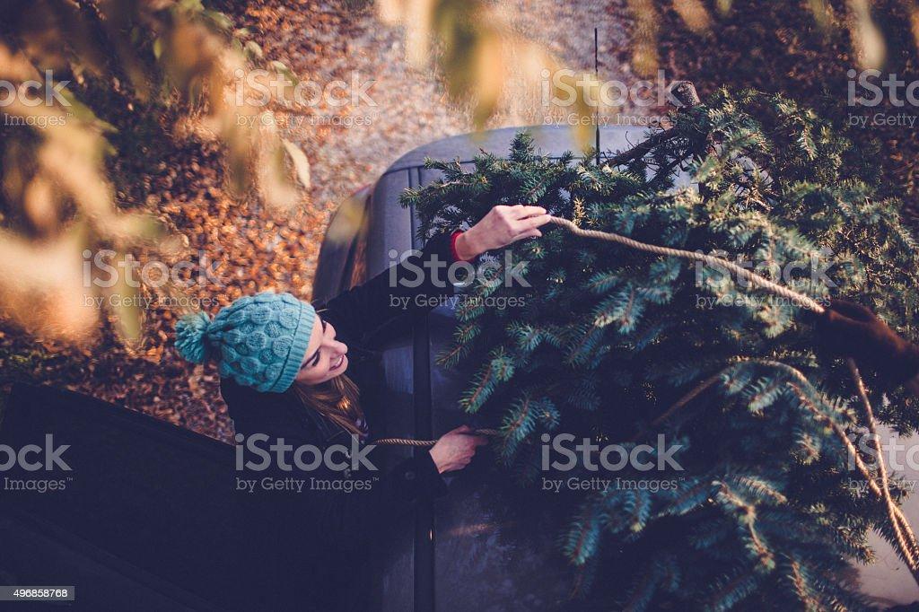 I choosed my Christmas tree stock photo