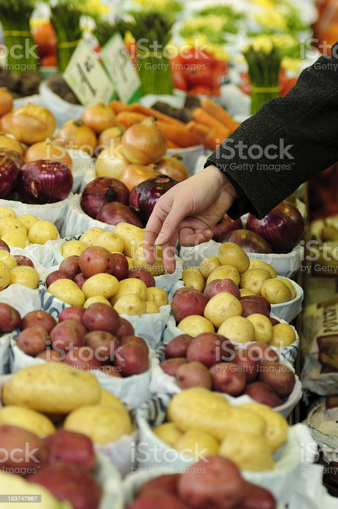 Choosing potatoes in an indoor market royalty-free stock photo