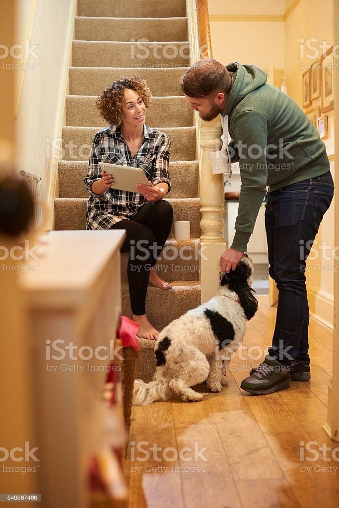 choosing the best pet care for the dog stock photo