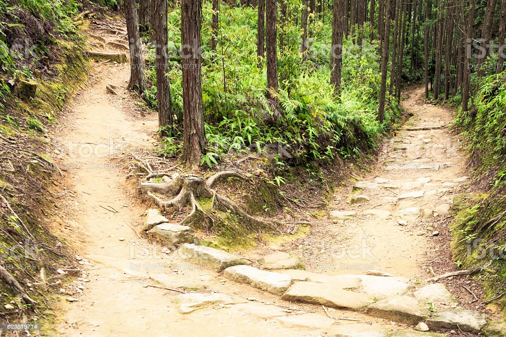 Choosing the path ahead stock photo