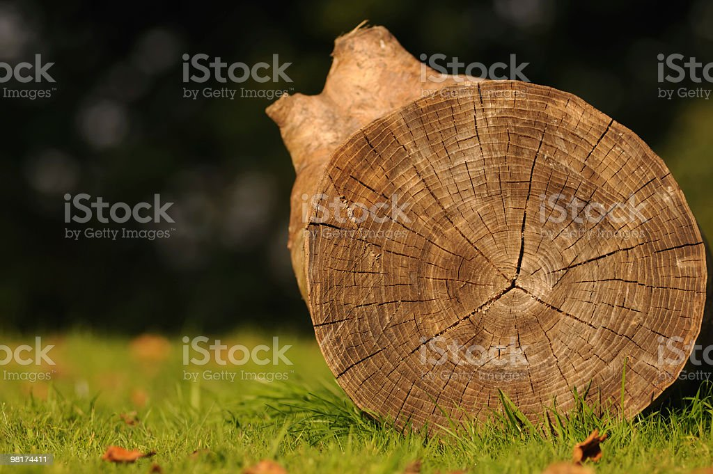 Chopped Tree Trunk royalty-free stock photo