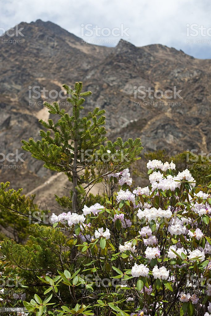 Chopta Valley In Northern Sikkim, India royalty-free stock photo