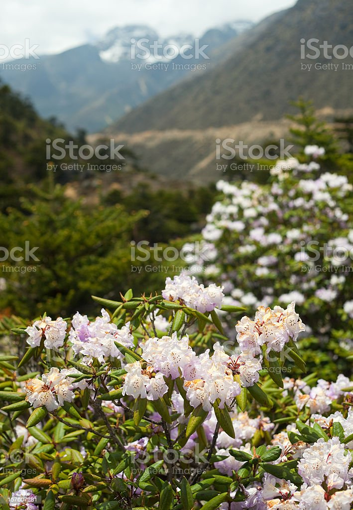 Chopta Valley In Northern Sikkim, India stock photo