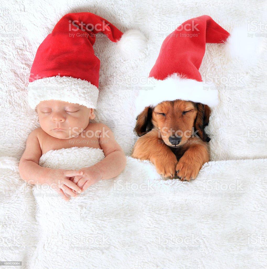Sleeping newborn Christmas baby alongside a dachshund puppy wearing...