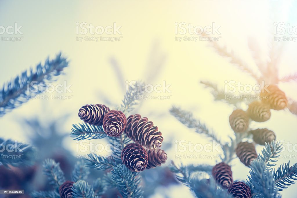 Christmas background with snow covered frozen fir tree with cones stock photo