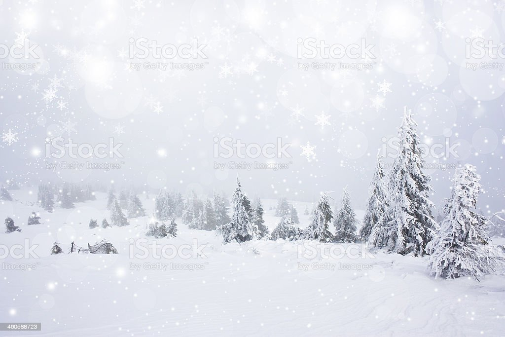 Christmas background with stars and snowy fir trees stock photo