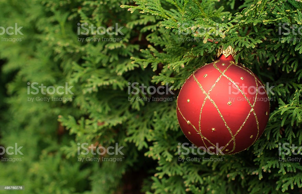 Christmas ball on an evegreen tree thuja stock photo