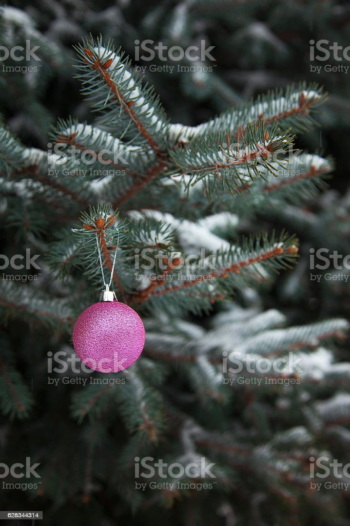 Christmas ball on the branch royalty-free stock photo