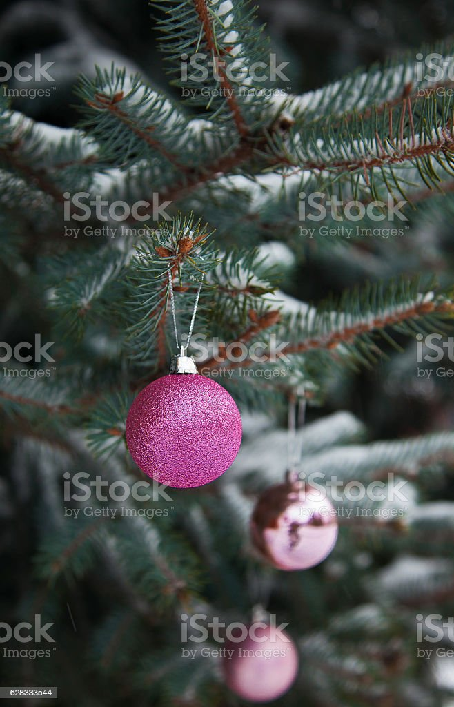 Christmas ball on the branch  tree royalty-free stock photo