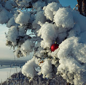 Christmas balls on a snow-covered fir branch
