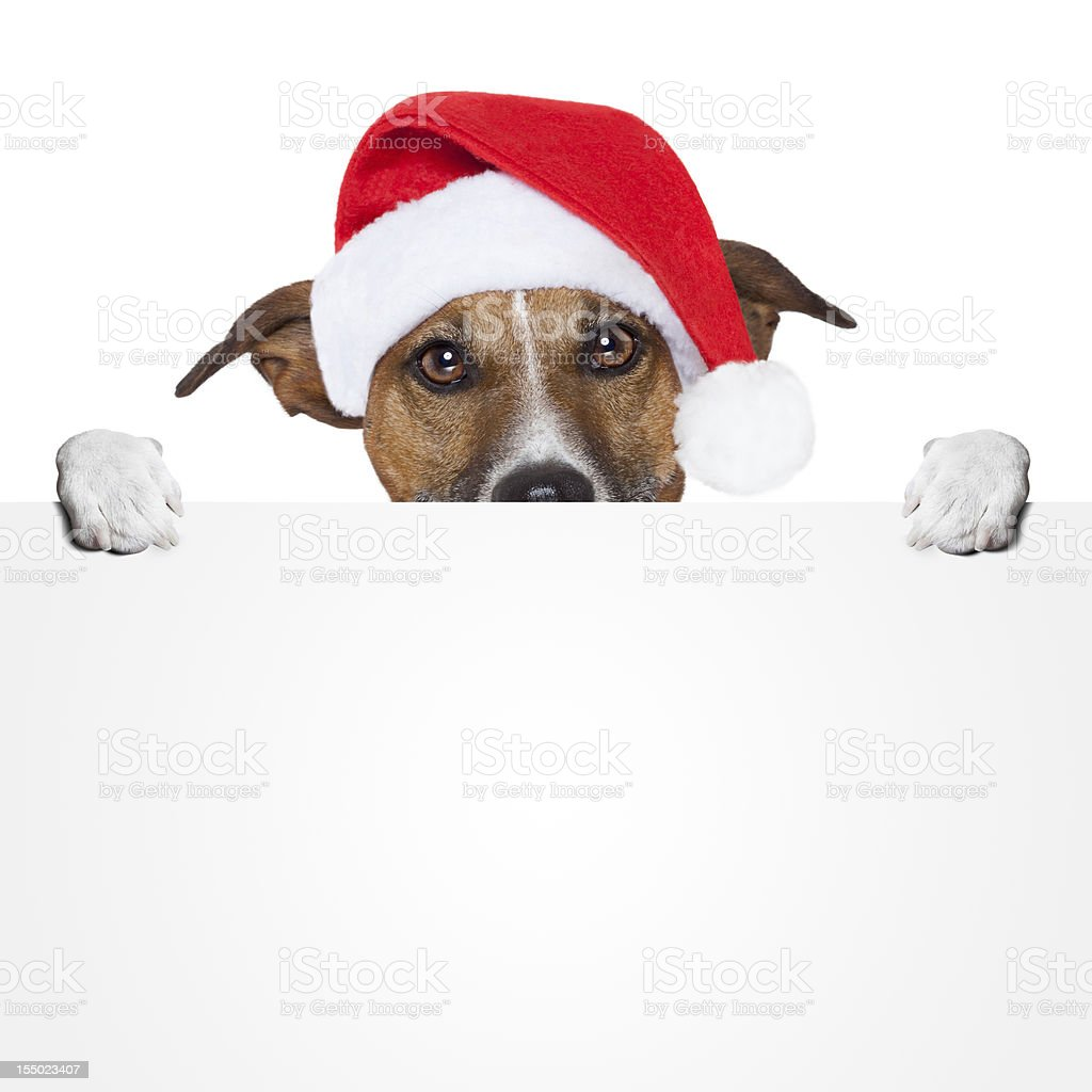 christmas banner placeholder dog royalty-free stock photo