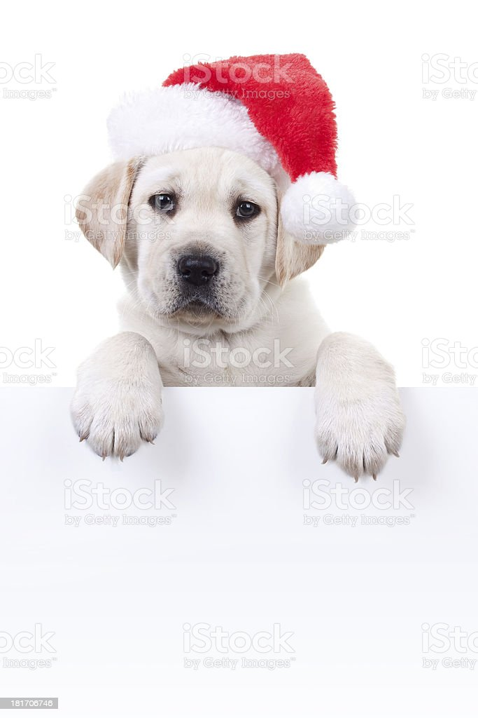 Christmas Banner Puppy stock photo