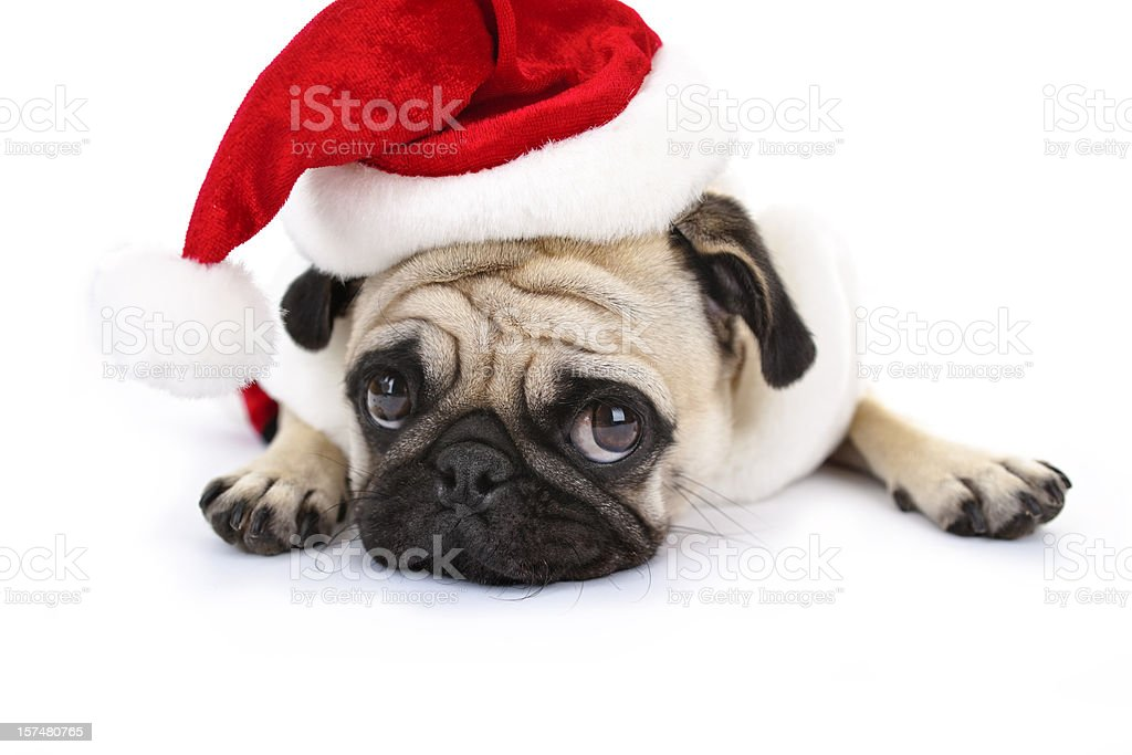 Christmas Bashful stock photo