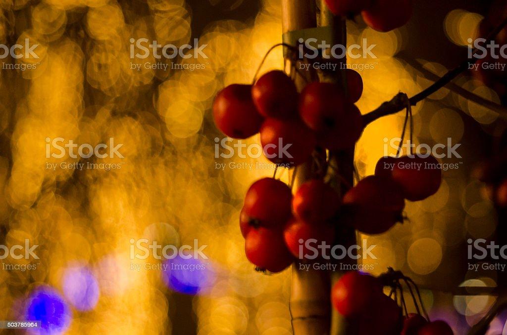 Christmas berries stock photo